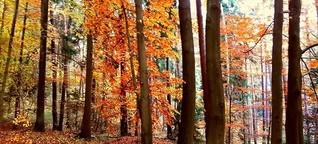 Natürlich geheilt: Waldbaden