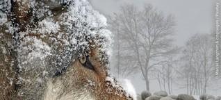 """Keine Angst vor dem """"bösen Wolf""""? - KOMMUNALtopinform [1]"""