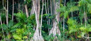 Brasilien: Gefahr im Wald