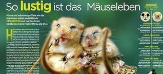 TV DIREKT: So lustig ist das Mäuseleben