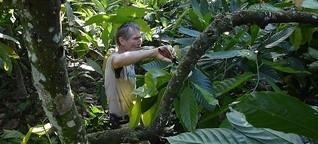 Landwirtschaftliche Revolution im Dschungel