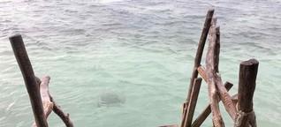 Auch ein Fischer hat Träume. Ein unglaublicher Roadtrip durch Jamaika.