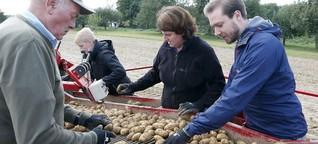 """""""Über die Schulter geschaut"""" bei der Kartoffelernte in Roßdorf"""