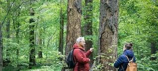 Mein Freund, der Baum | einfach München