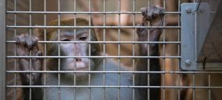 Über den unerbittlichen Streit um Tierversuche - Die Affen von Tübingen