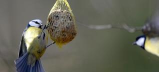 """Artenschutz: """"Vögel zu füttern, ist im Sommer viel wichtiger als im Winter"""""""
