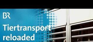Veterinäre machtlos gegen Tiertransporte | quer vom BR