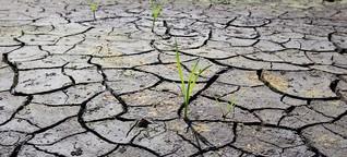 Alarmierend: Grundwasser im Norden vielerorts auf Tiefstand