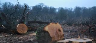 RWE will Wald für Braunkohle weiter roden und bekommt Recht
