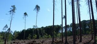 Deutscher Wald im Ausnahmezustand