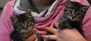 So viele Katzen wurden noch nie im Tierheim abgegeben