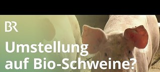 Herz für Bioschweine: Lohnt sich die Umstellung eines konventionellen Betriebs? | Unser Land