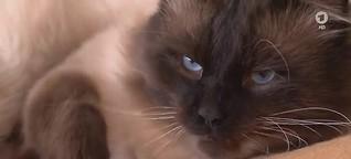 Was Katzen nachts so machen: Tagsüber Faulpelz - nachts wild und gefährlich