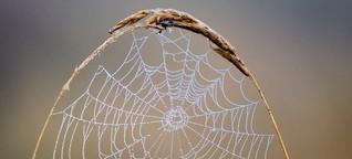 Spinnenseide könnte zum Multitalent werden