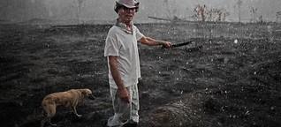 Roden, um am Amazonas zu überleben
