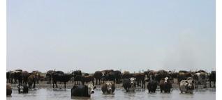 Argentinien: Export von Rindfleisch auf Höchststand