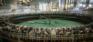 Milchrkise im Emirat: Kühe für Katar