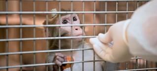 """Tierversuche: """"Aus ethischen Gründen kann man fast nichts ablehnen"""""""