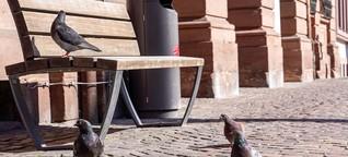 Keine Ausnahme: Tauben-Füttern in Würzburg weiterhin verboten