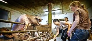 Siebtklässler auf einem Schulbauernhof: Die Distanz zur Natur