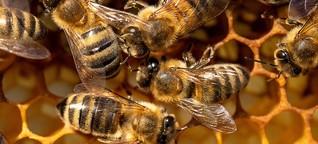 Landlebende Insekten werden immer weniger