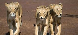 Evolution: Das tierisch lange Leben der Frauen