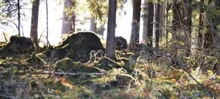 Tiny Forests für den Klimaschutz
