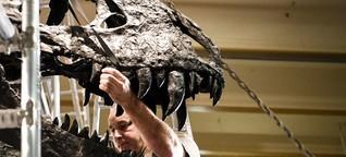 T-Rex Tristan Otto: Dinosaurier aus Berlin zieht um