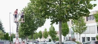 Klimaschutz : Fremde Bäume gegen Hitzestress und für Artenvielfalt / gut zu wissen, BR