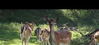 Ausflugstipp für den Corona-Sommer: Ein Besuch im Wildpark Rosengarten in Frankfurt (Oder)