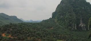 Grün, grüner, Malaysia