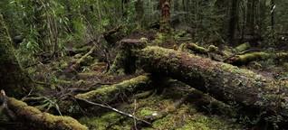 Tasmanien - Die Waldkriege sind nicht vorbei