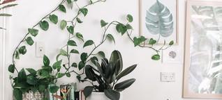 Warum sind alle meine Freunde plötzlich so verrückt nach Pflanzen?