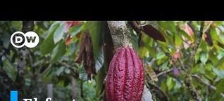 Cacao: el fruto del cambio