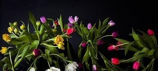 Das Bild am Sonntag: Roswitha Mecke - Blumengrüße