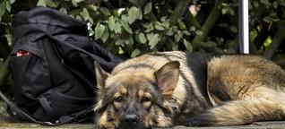 Hier tafeln Hamburgs Tiere kostenlos - Eimsbütteler Nachrichten
