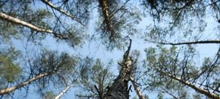 Neue Wälder braucht das Land