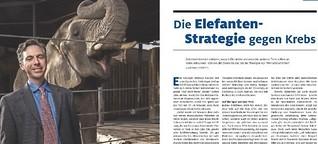 Die Elefanten-Strategie gegen Krebs