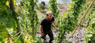 EU/Deutschland: Der mühsame Weinbau im Steilhang | Europamagazin
