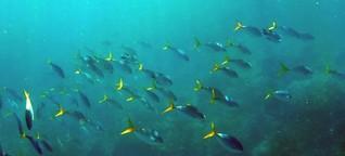 Unentdeckte Tiere in der Tiefsee