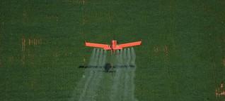 """Greenpeace: """"Jede zweite Frucht aus Brasilien mit Pestiziden belastet"""""""
