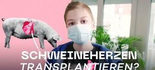 Schweine als Organspender / Wissenschaftsdoku - beta stories