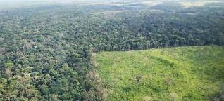 Illegale Abholzung und Waldbrände nehmen in Brasilien weiter zu