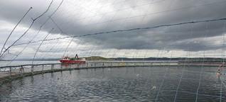 Norwegen: Läuse machen Lachs zum Luxusfisch
