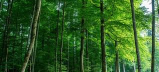 Unser Wald: Ein multimediales Webspecial - 3sat.de