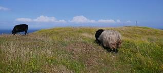 In den Highlands von Helgoland