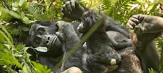 Neue Tour: Ihr Gorilla-Traum wird wahr in Uganda! | Elefant-Tours