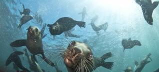 Traumtrip: Schnorcheln mit Robben in Kapstadt   Elefant-Tours