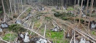 ZDF, Frontal21: Profit statt Naturschutz