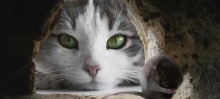 Die polyglotte Katze - Heinz Erhardt